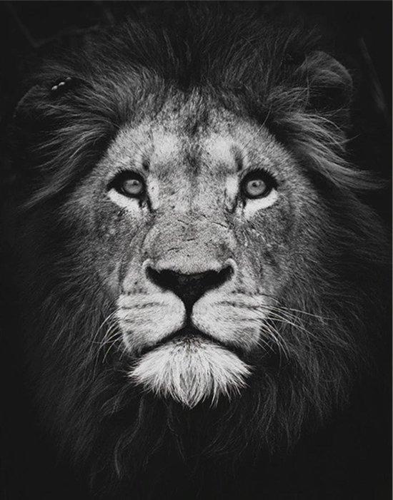 Diamond painting leeuw zwart wit