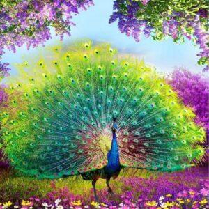 Kleurige pauw