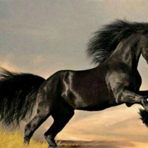 diamond painting fries paard