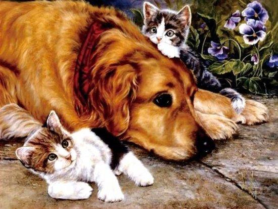 diamond painting hond en kat
