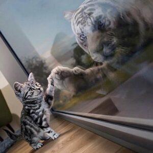 diamond painting kat en tijger