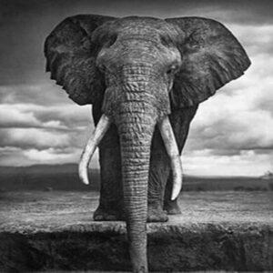 diamond painting olifant zwart wit