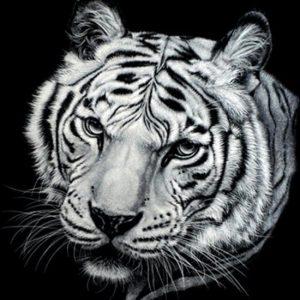 diamond painting tijger zwart wit