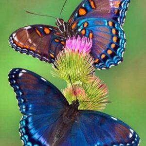 diamond painting vlinder met bloem