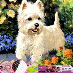 lieve hond