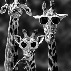 Diamond painting giraffe met zonnebril
