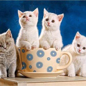 Diamond painting kittens