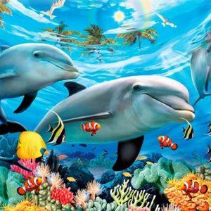 Diamond painting kleurrijke dolfijnen