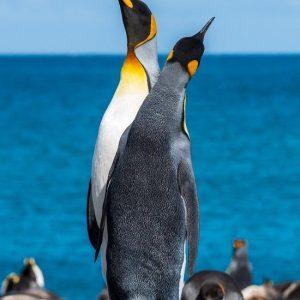 Diamond painting pinguin