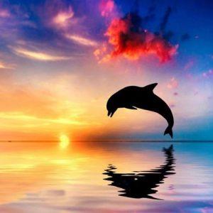 Diamond painting springende dolfijn