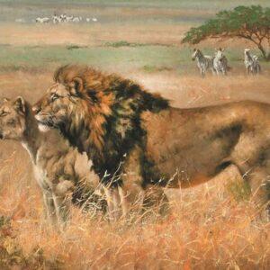 Leeuwen op de Savanne