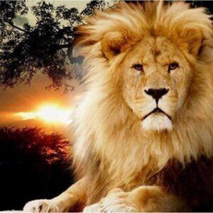 Machtige leeuw
