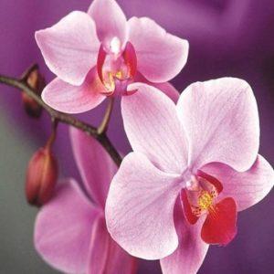 diamond painting orchidee