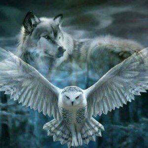 diamond painting wolf met uil