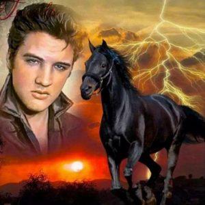 Diamond painting Elvis met paard