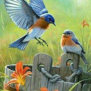 diamond painting kleurrijke vogels