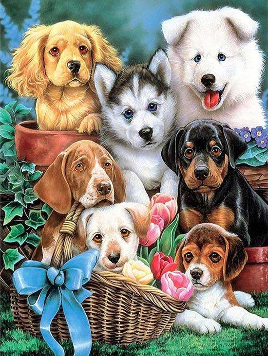 diamond painting schattige honden
